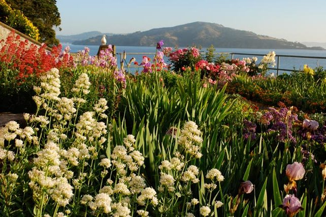 Gardens of Alcatraz : The Garden Conservancy