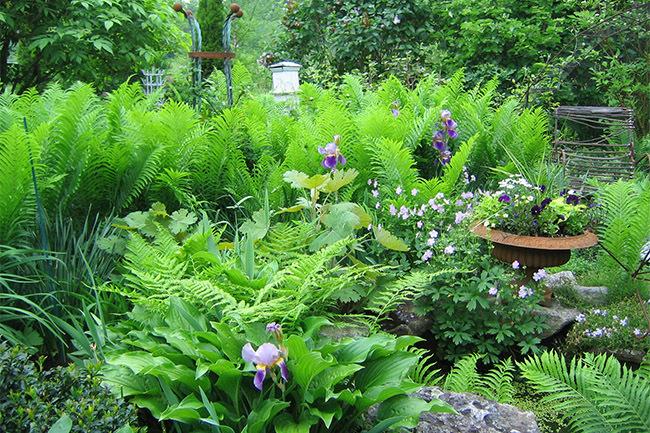 The Jones' Garden