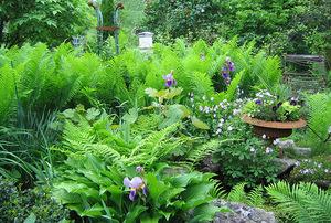 Debby and Bart Jones' Garden