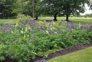 Steepletop—Poet Edna St. Vincent Millay's Garden