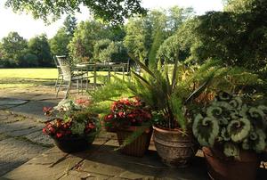 Ken Eisold's Garden