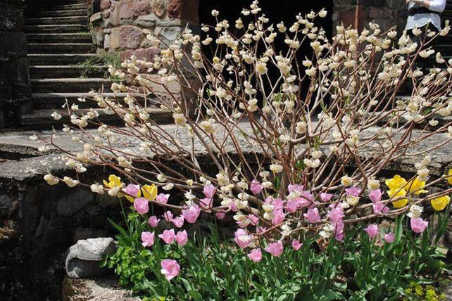 Spring_Greenwood_web