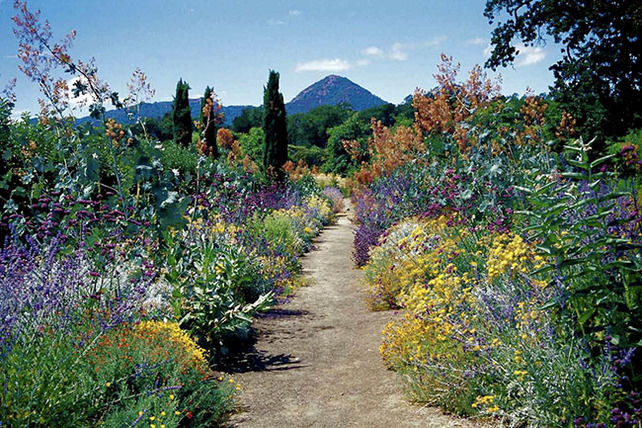 The gray borders- habitat garden of drought resistant plants