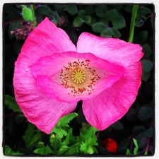 #gardenconservancy sueallen11