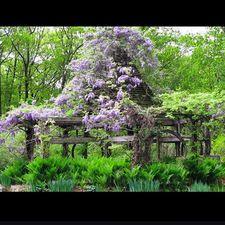 #gardenconservancy debbytenquist