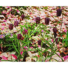 #gardenconservancy lindaparkphotography