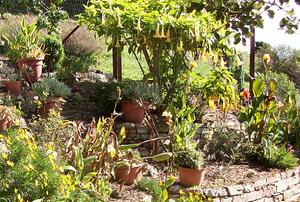 Leianne's Garden