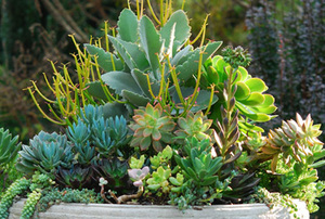 Digging Deeper: Succulent Love with Katherine Tracey