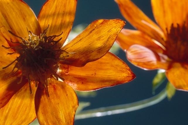 Artista Destacado - Glass Gardens Northwest | Northwest Flower & amp; Mostrar Jardín | gardenshow.com