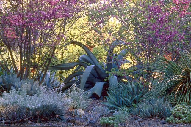 Ruth Bancroft Garden, Walnut Creek, California