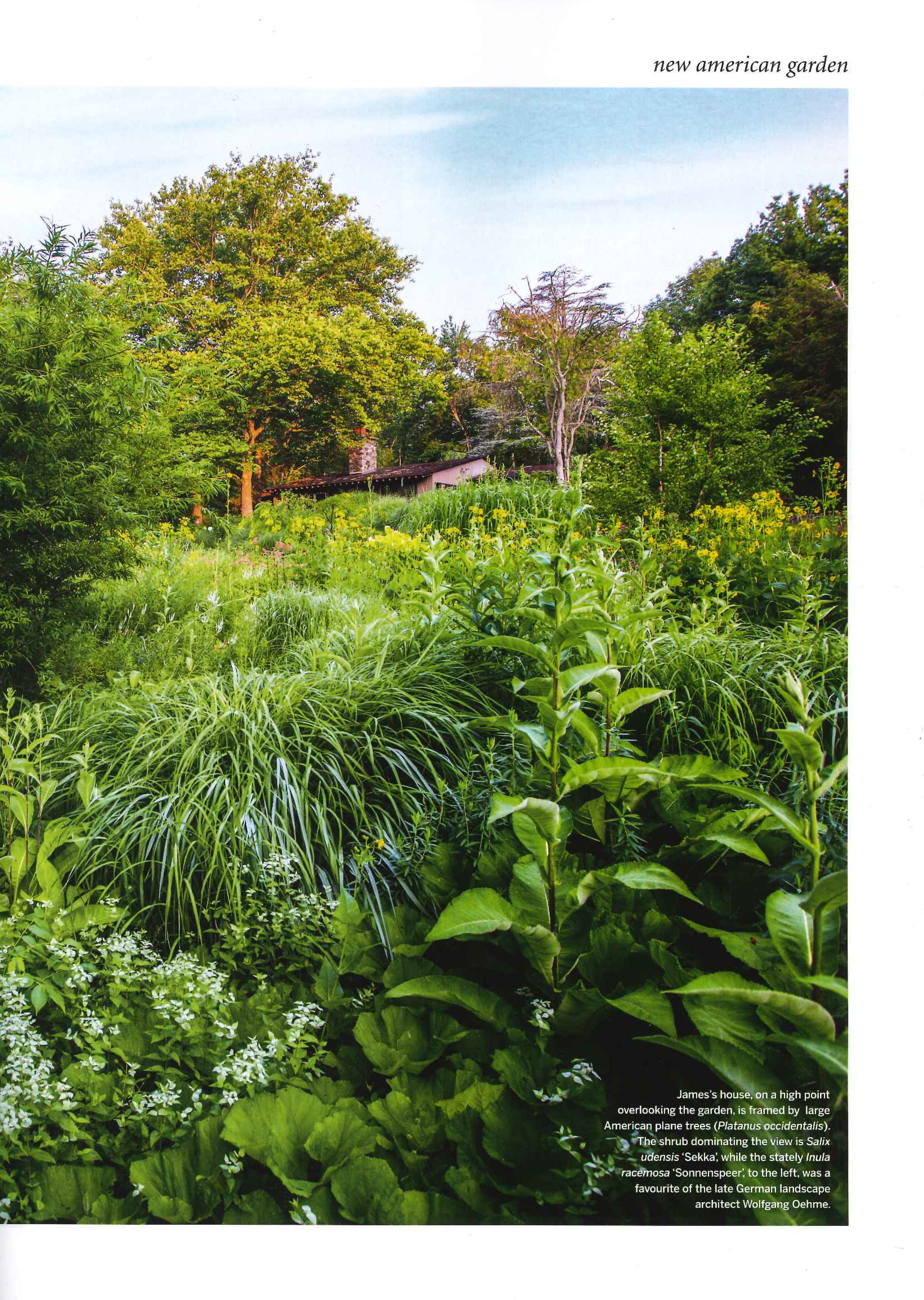 a true plantsman with an artists eye open days garden host james golden has created richly layered naturalistic plantings that evoke alice in wonderland - Garden Homes Nj