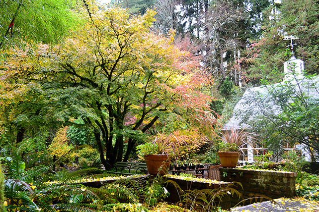 Leach-Botanical-Garden-Mary-Edmeades-photo-autumnglory 11-10-WEB650x433