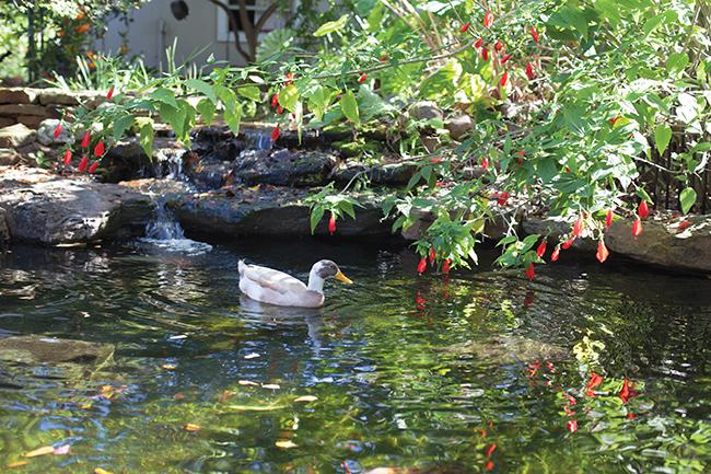 Selia Qynn\'s Garden Habitat : Garden Directory : The Garden Conservancy