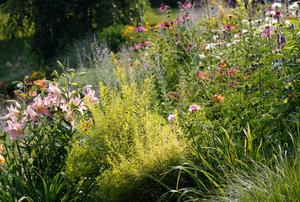 Danielle's Garden