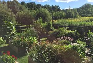 Mansfield Garden