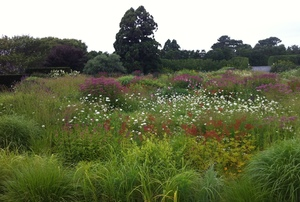 Digging Deeper: A Scholar's Garden—Inspirations for Creating a Meadow Garden