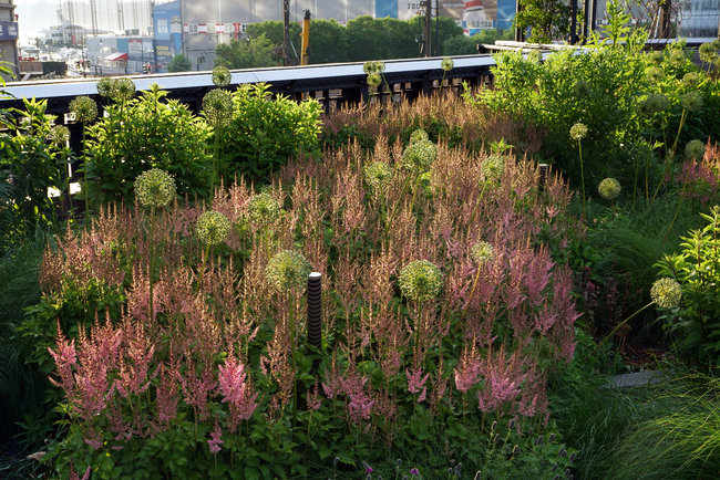 The High Line Reimagining The Accidental Landscape Events