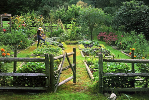 Digging Deeper: I Plant, Therefore, I Am—Stories from a Connecticut Kitchen Garden