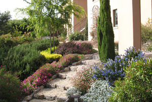Order and Exuberance in a Hillside Garden
