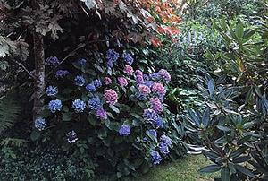 Meyers Garden