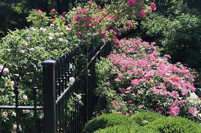 Delicieux Gothic Victorian Garden