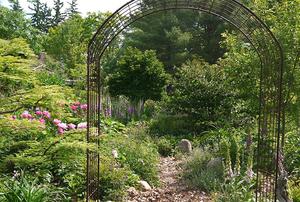 Sarah Patterson's Garden