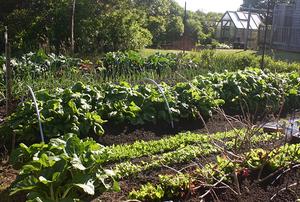 Morash Victory Garden