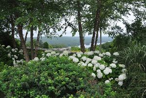 Mulla Garden