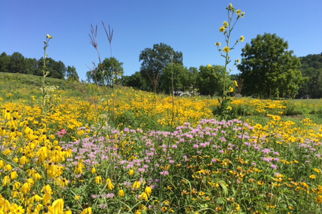 Digging Deeper: Confessions of a Prairie Plant Addict