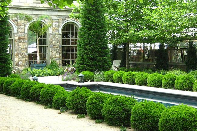 Digging Deeper: Boxwood For The Future