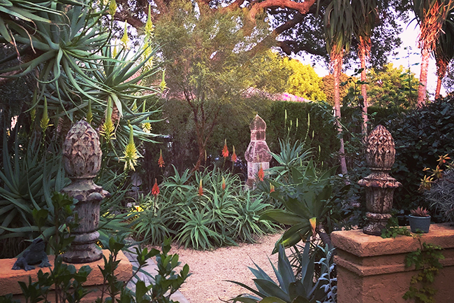Digging Deeper: In the Pink—Autumn in a California Garden