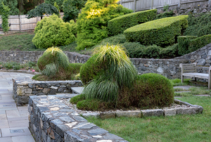 Digging Deeper: Topiary Dreams—Creating A Green Menagerie