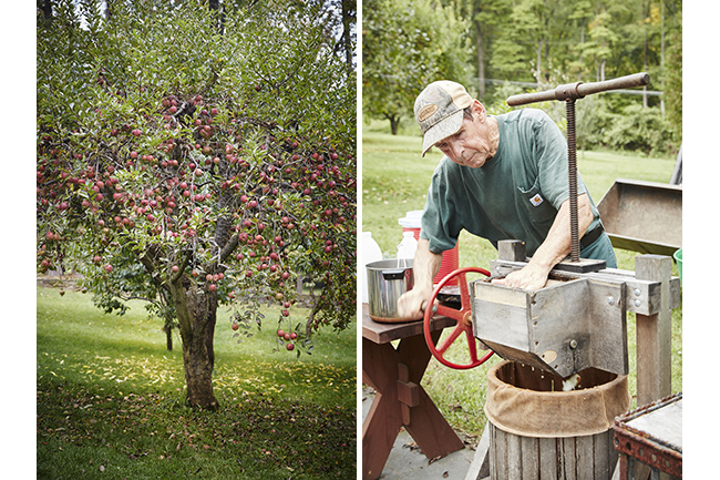Digging Deeper: Apples & Orchards—A Cider Party