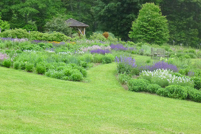 Digging Deeper: The Making of a Meadow Garden