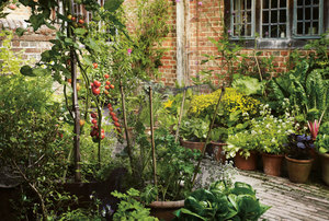 Grow Fruit & Vegetables in Pots: Lessons from Great Dixter - SOLD OUT