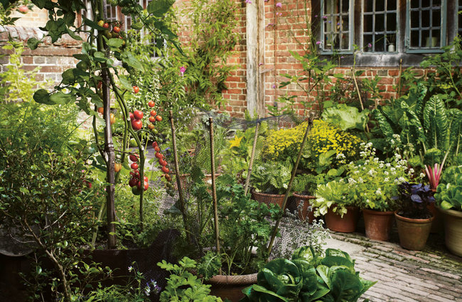 Grow Fruit Vegetables In Pots Lessons From Great Dixter Sold