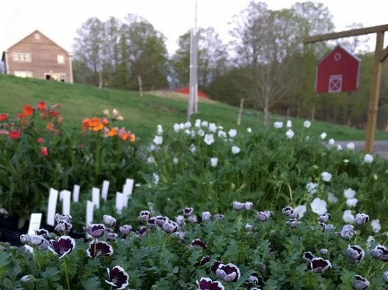 Digging Deeper: Bunker Farm Plants - Members