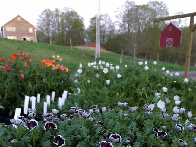 Digging Deeper: Bunker Farm Plants