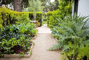 Adams Family Garden