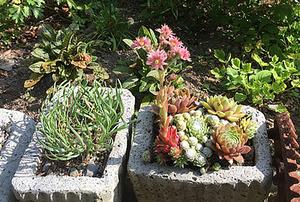 Mary Squyres Garden