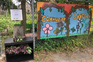 Peace and Plenty Community Garden